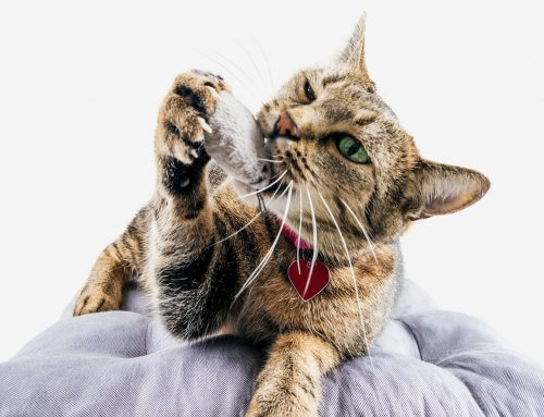 Rodenticide Toxicity And Your Pets